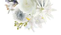 schoonheidssalon-soraya-darphin-bloem-8-flowers