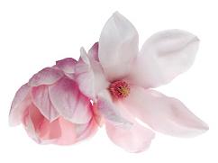 schoonheidssalon-soraya-darphin-bloem1